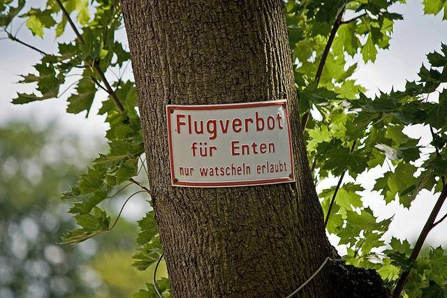 German humor: No-flight zone for ducks! Waddling only