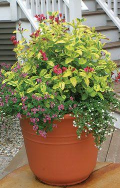 136 best Hummingbird Garden images on Pinterest Hummingbird