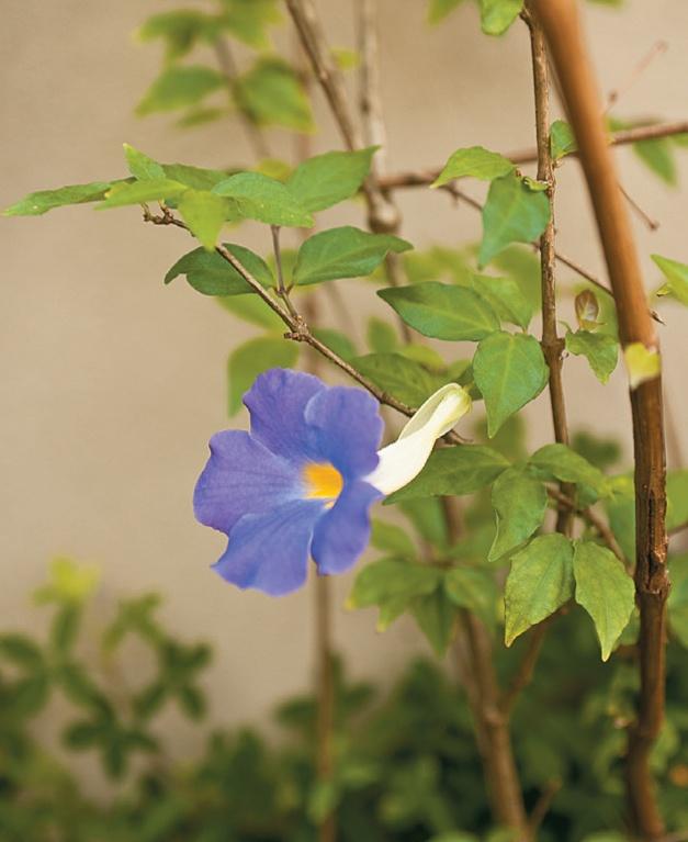 Bloemen Madeira. www.jacobos.nl