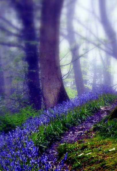 Image result for bluebell woods in the rain