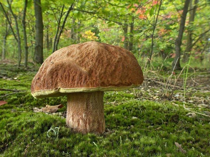 """Pictures of mushrooms from """"Passione Funghi & Tartufi"""""""
