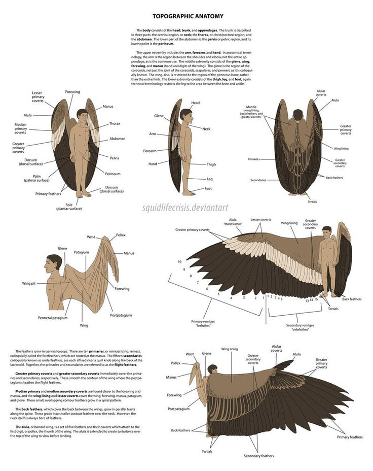 42 best Winged Life images on Pinterest | Drawing ideas, Drawing ...