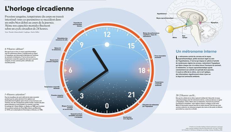 Le cycle circadien // Cerveau&Pscyho