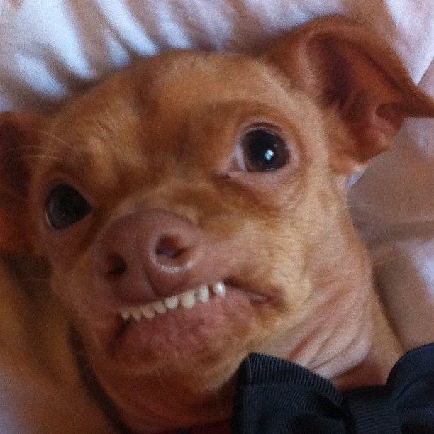 Do Dogs Like Tuna