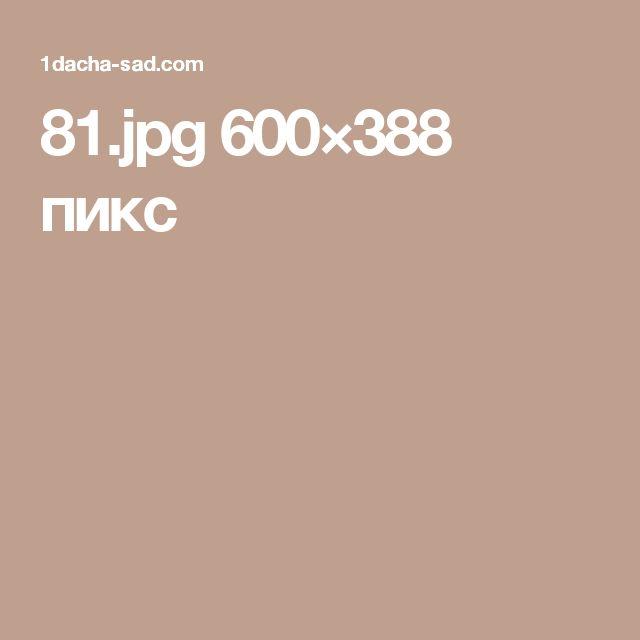 81.jpg 600×388 пикс