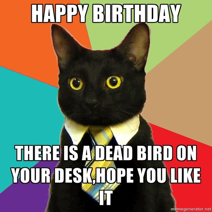 Birthday Cat Meme Generator: 1000+ Images About Business Cat On Pinterest