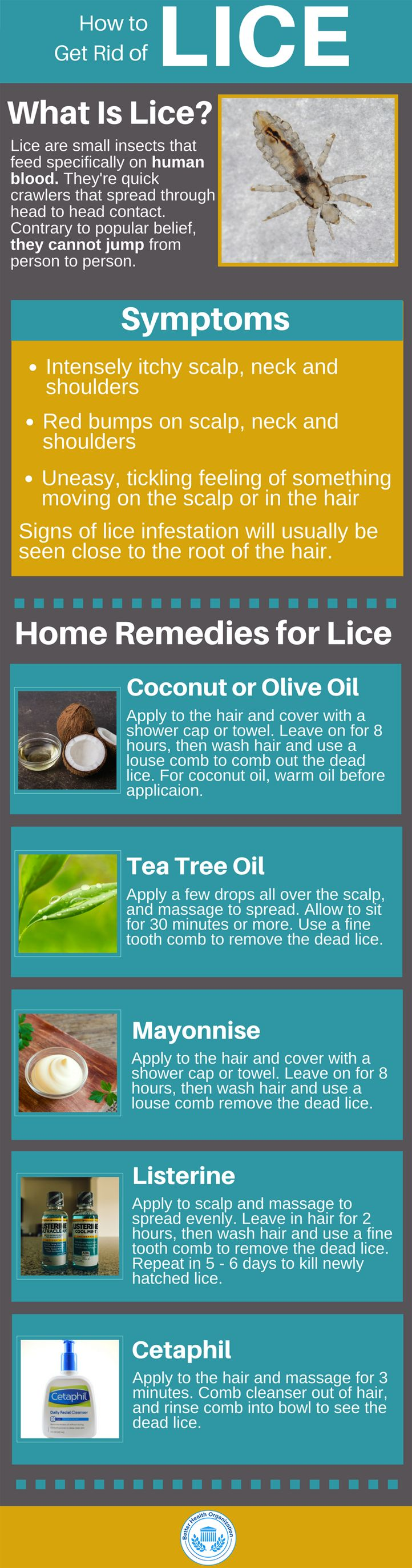 How to Get Rid of Lice & Lice Eggs – Symptoms, Treatment and Prevention