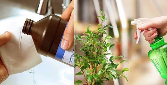 Metti 1 cucchiaio di acqua ossigenata alle tue piante e guarda cosa succede