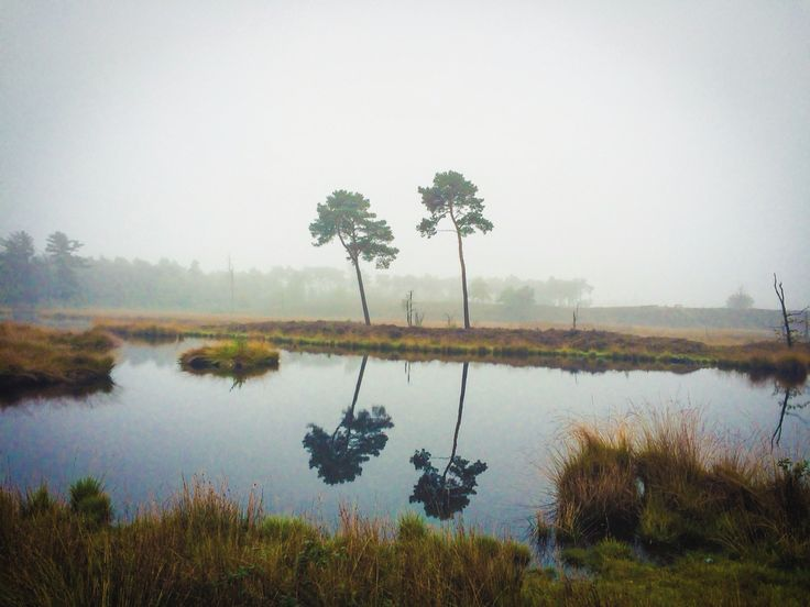 """""""At night I dream that you and I are two plants that grew together, roots entwined, and that you know the earth and the rain like my mouth, since we are made of earth and rain."""" ~Pablo Neruda, Regalo de un Poeta  #trees #roots #entwined #love #poem #foggy #geldersestreken #ig_nature #nature #pabloneruda #earth #earlymorning #romantic"""