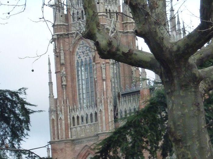 Catedral de La Plata, vista a través de un árbol de Plaza Moreno.