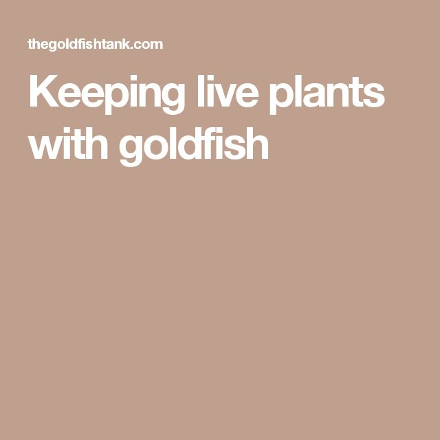 Keeping live plants with goldfish