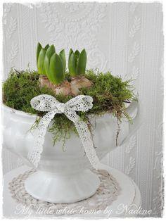 Frühling im Suppentopf