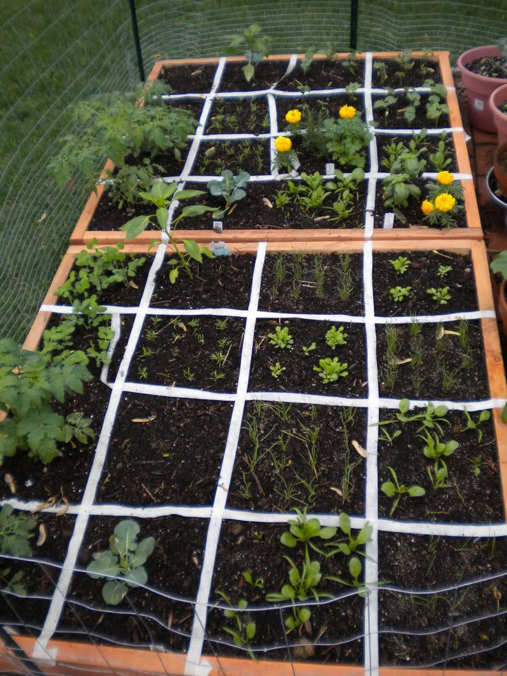 33 best ideas about for the green thumb i want but don 39 t for Square foot garden designs
