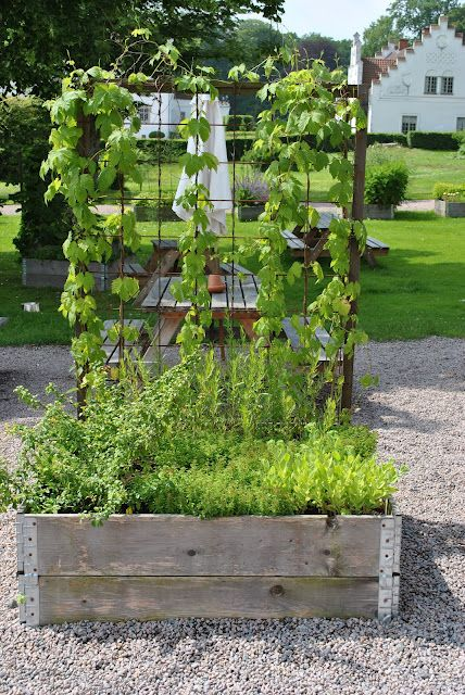 I wouldn't put grape vines on this trellis box, but other lighter vines would be great.