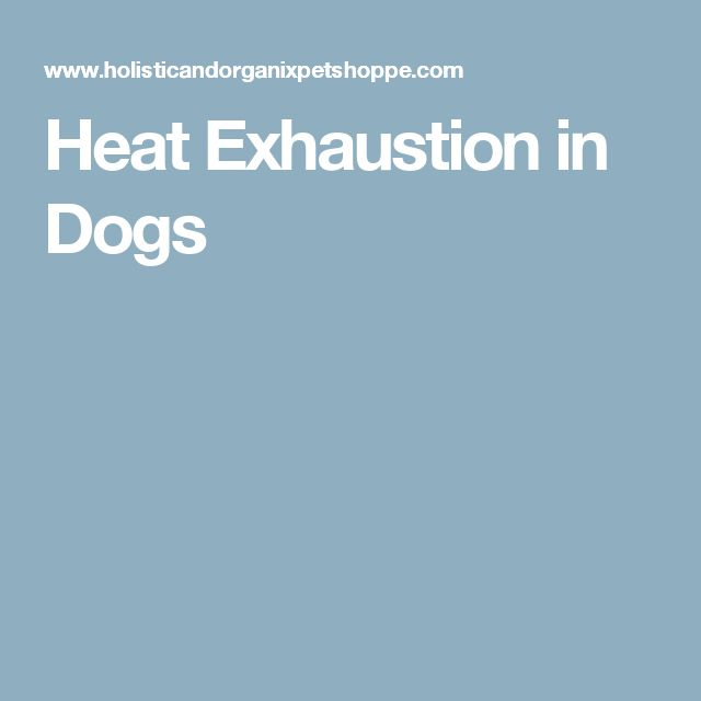 Heat Exhaustion in Dogs