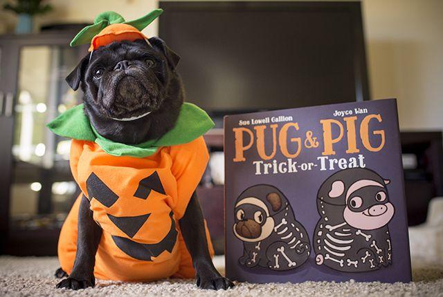 Last chance WIN 1 of 4 Pug & Pig Trick or Treat Books http://www.thepugdiary.com/win-1-4-pug-pig-trick-treat-books/