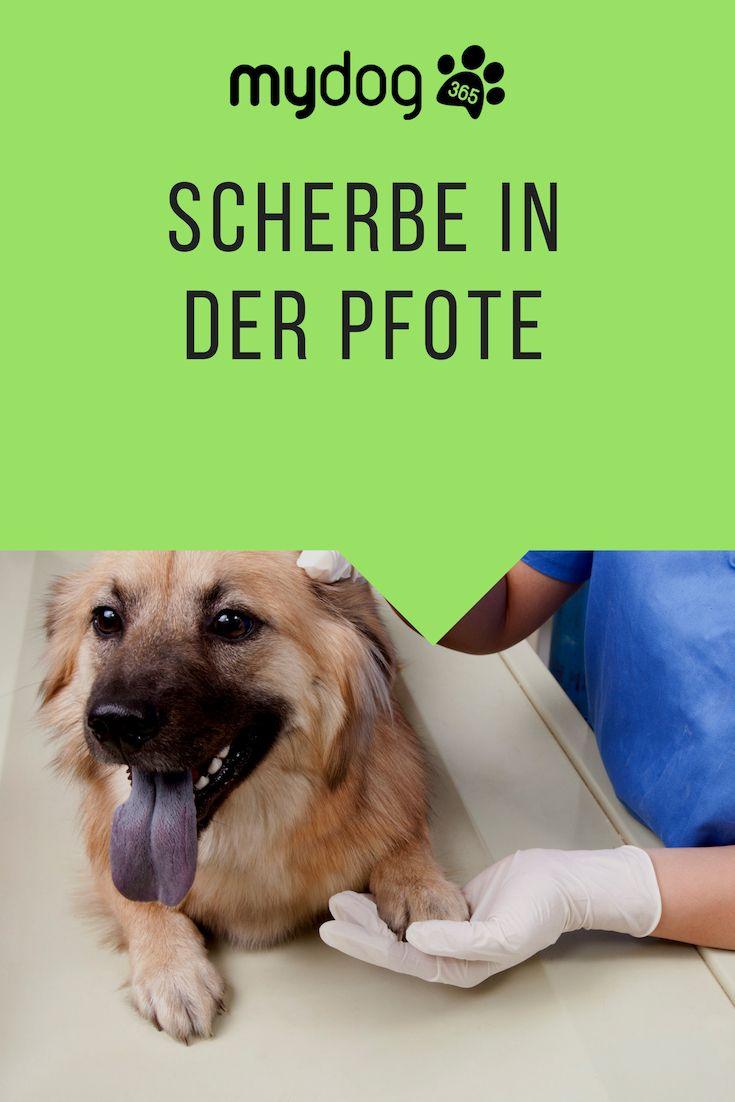 Scherbe In Der Pfote Pfoten Hundegesundheit Hunde