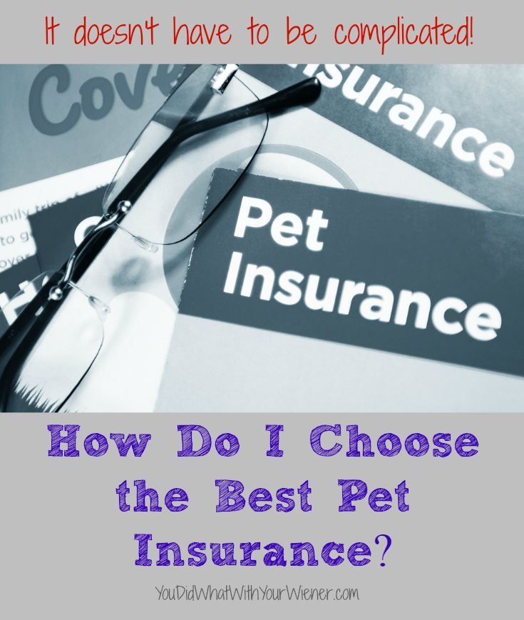 This comparison chart will help you choose the best pet insurance #sponsored