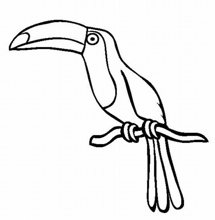 Rainforest Toucan : Playsational : Science Fair : Pinterest : Tiere ...