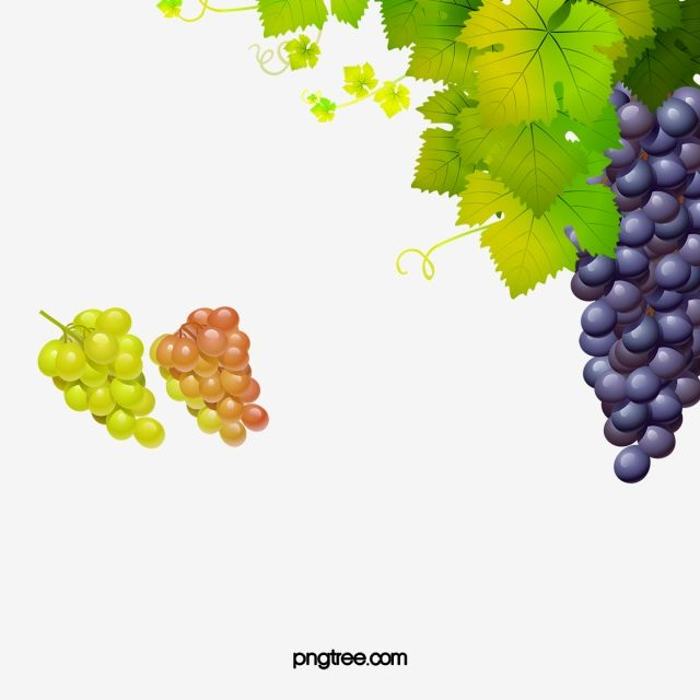 Grapes And Vines Image Red Grapes Delicious Grape Png Transparent Clipart Image And Psd File For Free Download Red Grapes Grapes Wine Vine