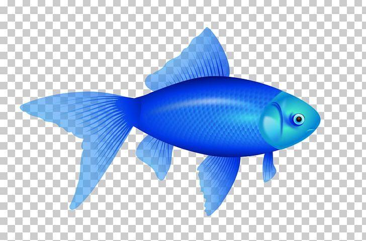 Pin By Ricky Greenleaf Payne On Fish Colorful Fish Fish Fish Tank