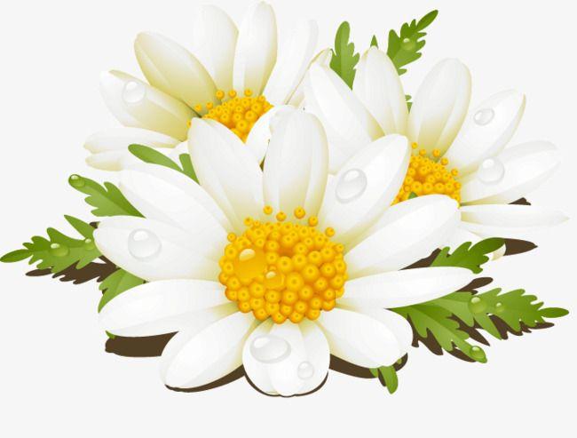 خيال ناقلات الزهور البيضاء الزهور زهور بيضاء جميل مستحضرات التجميل Png وملف Psd للتحميل مجانا White Flowers Beautiful Nature Flowers