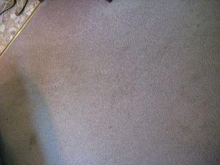 Quarry Orchard: Homemade carpet shampoo