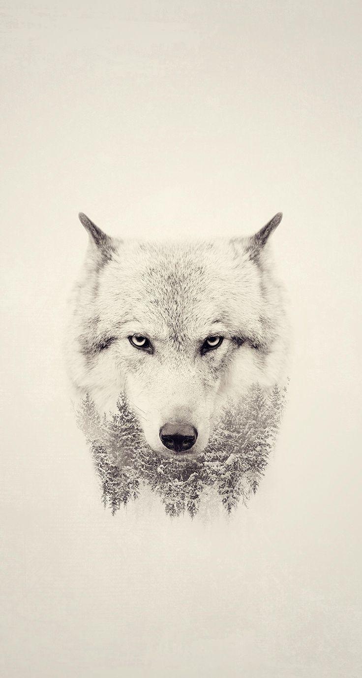Wolf Whiteout.... May 2016 Latest Screen Savers #15