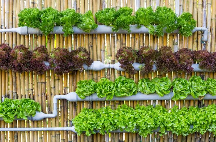 This hydroponic vertical garden is a great way to start your very own vertical garden since it's self-watering. The hydroponic system helps deliver water and nutrients to plants so that half of the work is taken out of gardening. This system comes in many different formats, but they all relatively provide the same thing.