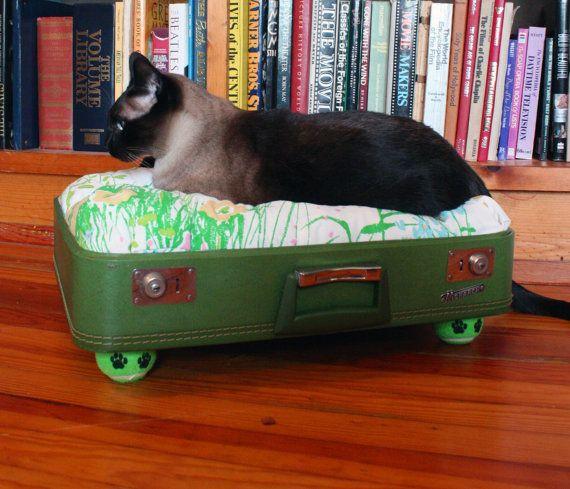 70 Best Kitties Images On Pinterest