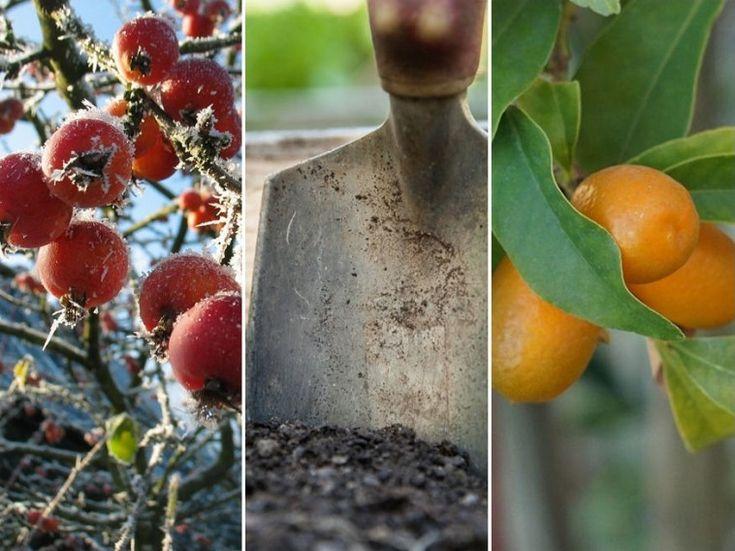 Az év első 3 hónapja: a kertész teendői, ezúttal ne mulaszd el!