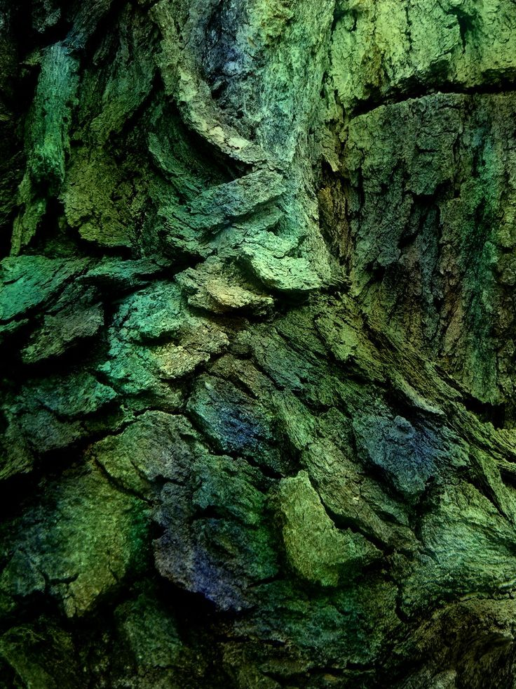 Beautiful blue and green tree bark