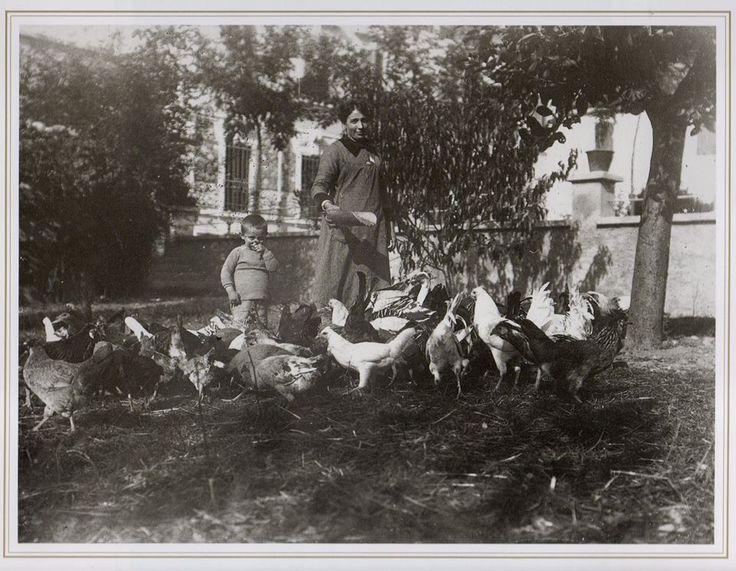 ALTO MANTOVANO 1920 Allevamento di polli