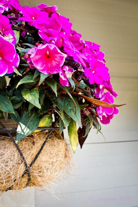 summery flower basket http://www.webbypics.com/wp-content/uploads/2011/09/IMG_9668.jpg