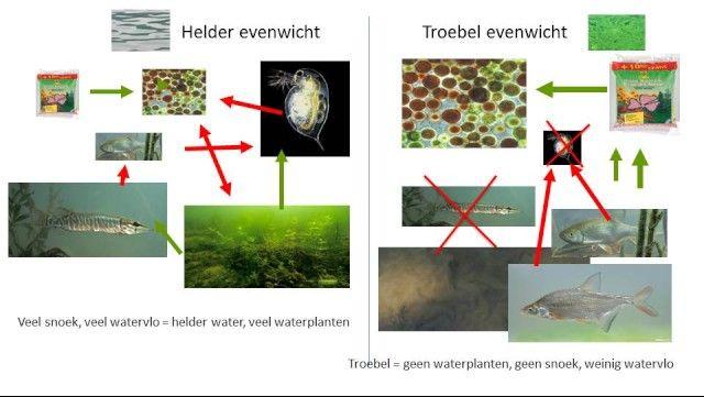 Traject | Biotoop: moeras en water | Waterkwaliteit: helderheid en nutriënten | Ecopedia | Bouwen aan groenexpertise
