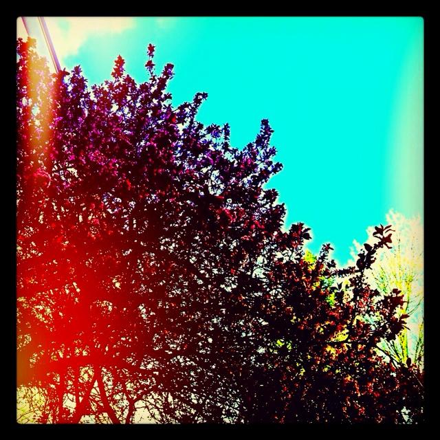 Summertime plum blossoms <3: Summertime Plum, Plum Blossoms