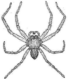 how to draw spider legs