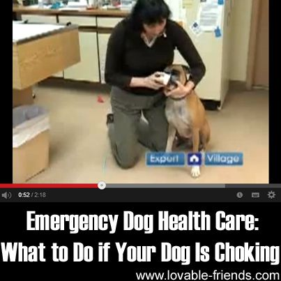 Emergency Dog Health Care What to Do If Your Dog Is Choking