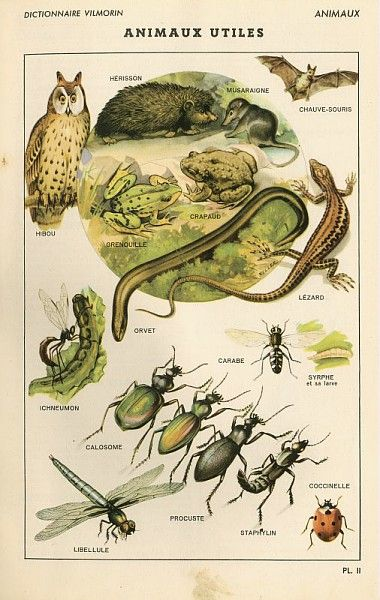 Planche, représentant les animaux utiles au jardin, extraite du Dictionnaire Vilmorin des plantes potagères, Paris, 1946 ©Musée du Vivant-AgroParisTech