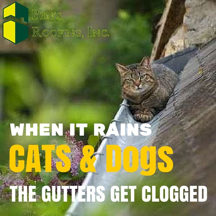 Good News Cat Will Bolt For Cover When Real Rain Starts Cat Rain Gutters Gutters Cats Rain Gutters