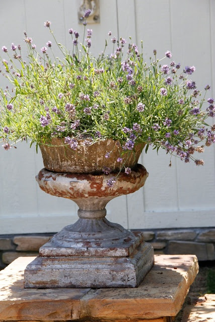Lavender in a garden urn...love the way the urn looks as if it!s a century or two old. If not, I'd make it look that way!