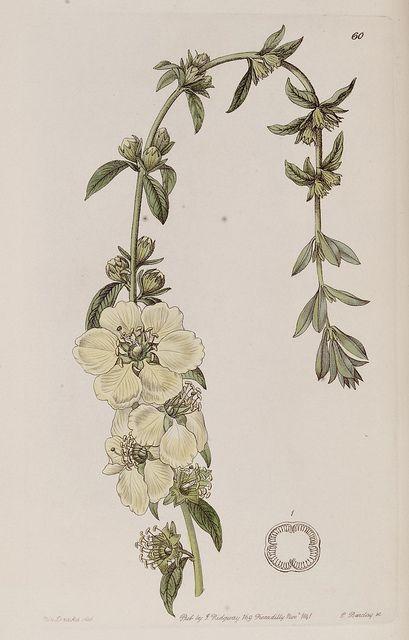 Botanical tattoo design inspiration
