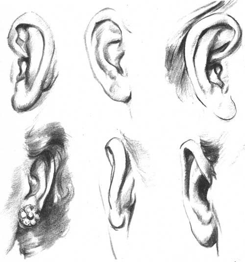 How to Draw Ears | All About Ears | Pinterest | Planes ... Ear Sketches