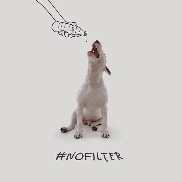 Hilarious photos of pup, post divorce.