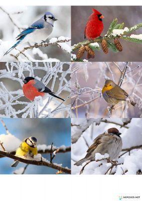 дидактические игры животные зимой