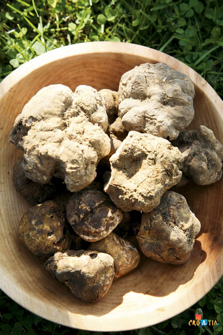 White truffles from Istria, Croatia. #truffles #istria #croatia