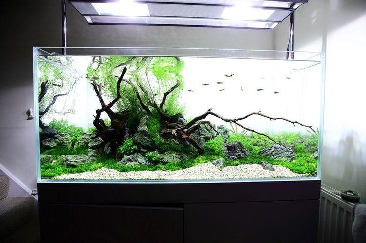 Clear aquarium www.ibrio.it your aquarium born here ! il tuo acquario nasce qui ! https://www.facebook.com/ibrio.it #ibrio #acquario #acquari #acquariologia #acquariofilia #aquarium #aquariums #piante #natura #pesci #zen #design #arredamento #layout #layouts #layoutdesign #roccia #roccie  #moss #freshwater #plantedtank #aquadesignamano #tropicalfish #fishofinstagram #aquaticplants #natureaquarium #nanotank #reefkeeper #nanoreef #saltwateraquarium from web