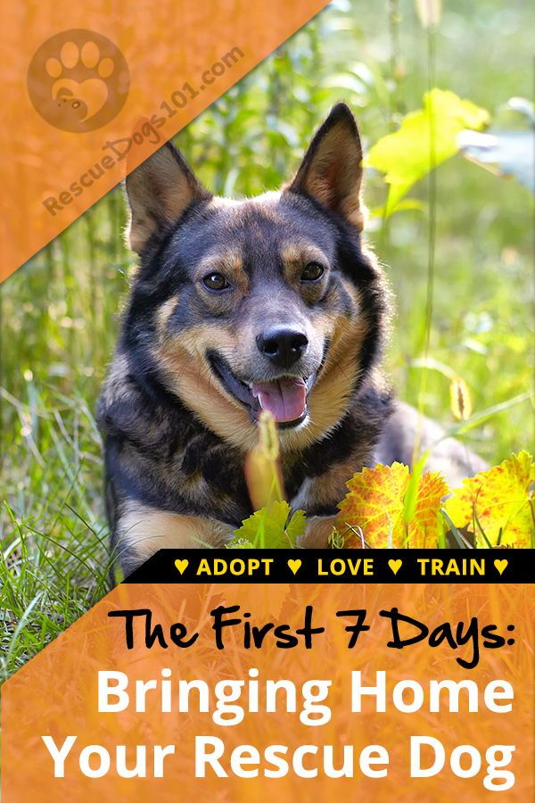 The First 7 Days Bringing Your Adopted Dog Home Rescue Dogs