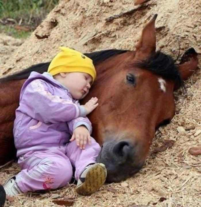 This horse is letting this youngster sleeping with him