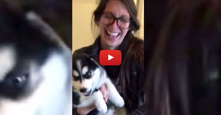 """This amazingly adorable talking #husky #puppy knows how to say """"momma!"""" - Watch: http://www.entirelypets.com/talking-husky-puppy.html?utm_source=twitter&utm_medium=web&utm_campaign=eptwpostvv#utm_sguid=148622,10c65be9-38bb-9ba3-81a5-fdb7324caa75"""